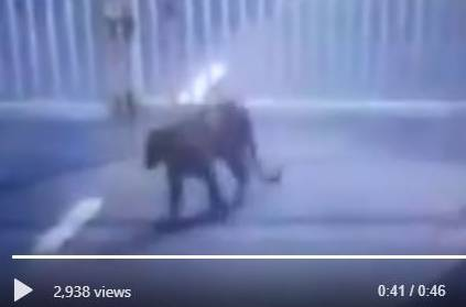 Leopard entered Secretariat premises in Gujarat Video goes Viral